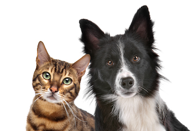 Preventing and Treating Hot Spots on Your Dog or Cat